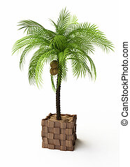 Coconut Tree in 3D