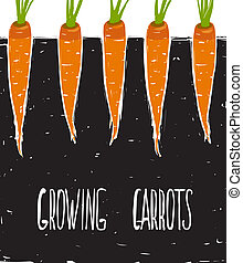 Growing Carrots Freehand Drawing and Lettering - Bed of...