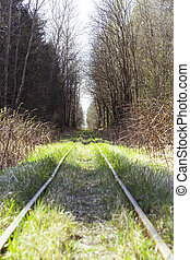 Narrow Gauge in forest. Goes to infinity