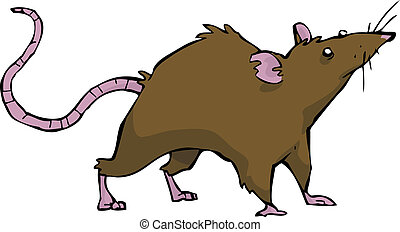 Wild rat on white background vector illustration