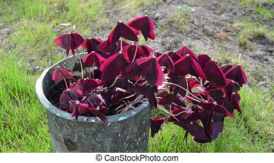 house plant retro pot - house plant burgundy claret with...