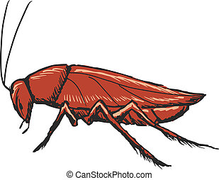 cockroach - hand drawn, sketch, cartoon illustration of...