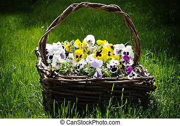 Pansy Flowers - Photo fo the Bright Pansy Flowers in Basket
