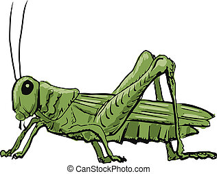grasshopper - hand drawn, sketch, cartoon illustration of...