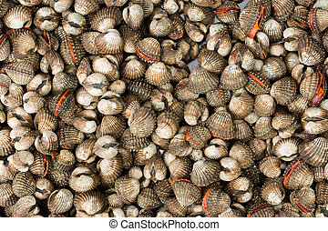 Saltwater cockles - background of fresh cockles
