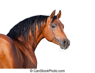 Chestnut horse head isolated on white background, Arabian...