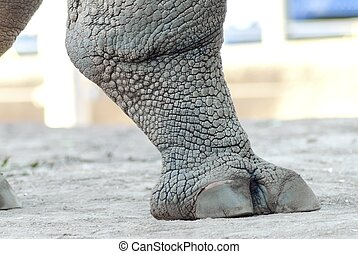 Rhinoceros leg - A close up view of a rhinoceros leg. It...