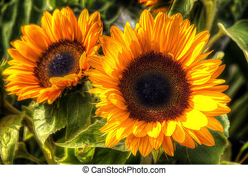 sunflower art - Close up image of beautiful sunflowers in...