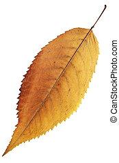 オレンジ, 秋, 葉, 隔離された