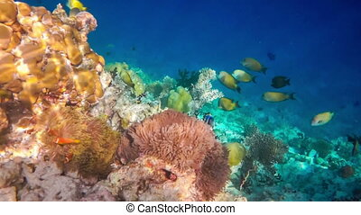 Tropical Coral Reef Coral reef in - Reef with a variety of...