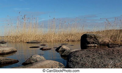 The tranquil view of the river with reeds - The tranquil...