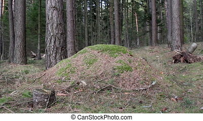 Closer look of the hill in the forest - The closer look of...