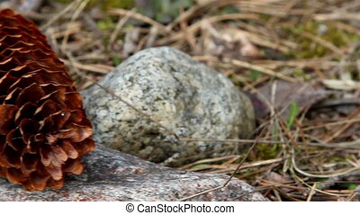 Closer look of a fir cone
