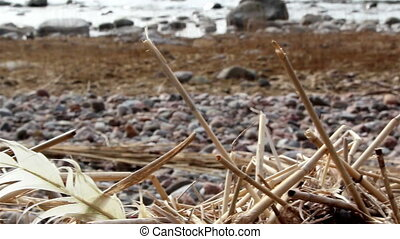 Withered stems from reeds on the ground - Withered stems...