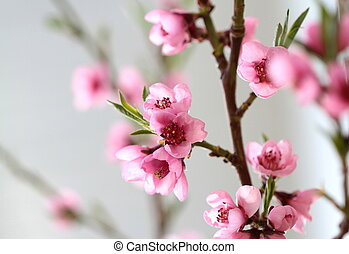 Pink spring flowers on branch