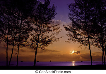 The Silhouette of Pine Tree During Sunrise at the indigo Sea Background