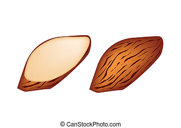 Whole and Slice Almonds on White Background - Illustration...