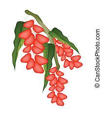 Red Ripe Pistachio Nuts on A Tree - Fresh Ripe Pistachio...