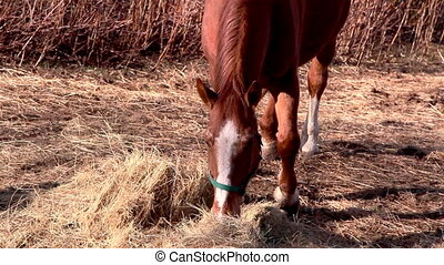 A brown horse grabbing some grasses - A brown horse with...