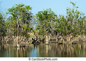 Mangrove forest degradation
