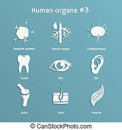 Set of paper icons with human organs and systems - Vector...