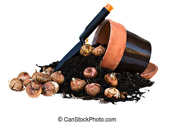 Clay Pots and flower bulbs - Clay Pots spilling out rich...