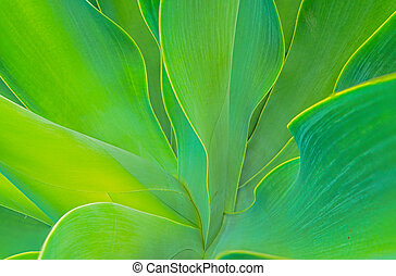 Agave - Closeup of agave detail