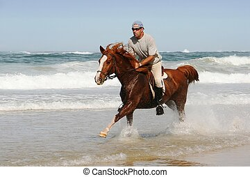 Galloping Horse at beach - Galloping brown horse and rider...