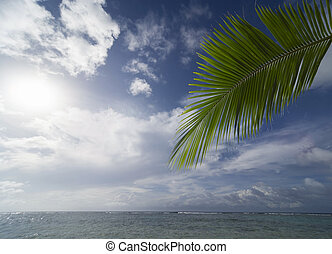 coconut leaf and sea