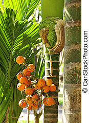 Jelly Palm Butia capitata - A tropical fruit tree found here...