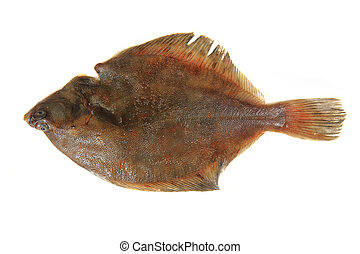 flatfish isolated - sea flatfish isolated on the white...