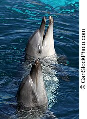 Friendly Dolphins - Two friendly dolphins with their heads...