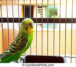 Cute budgerigar sitting inside a cage