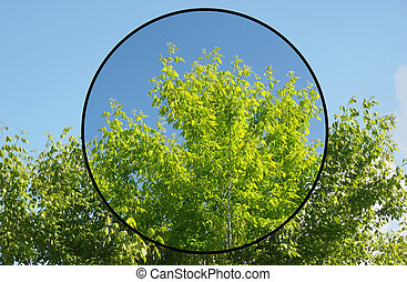 Polarising filter - Effect of polarising filter on trees and...
