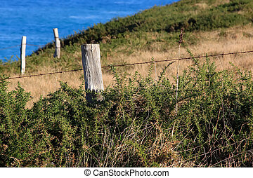 old wooden post in the fence of a meadow