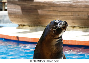 close up of beautiful sea lion