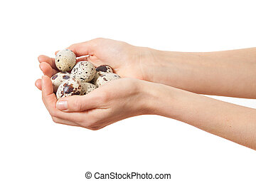 Quail eggs in hands isolated on white