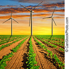 Wind turbines on field with green sunflowers in the sunset