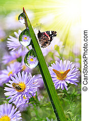 dew and butterflies - fresh morning dew and butterflies
