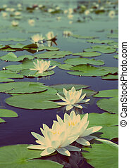 lake with water-lily flowers - vintage retro style