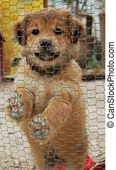 Little dog in a cage - Little cute dog in a cage