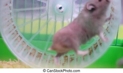 Hamster on wheel in a cage - Cute hamster running on wheel...