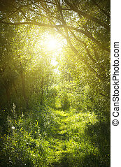 A narrow path in the fairy forest. Sunrise in summer forest.