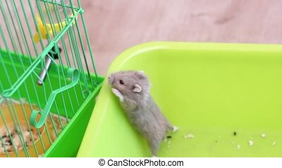 Hamster trying to escape the pan