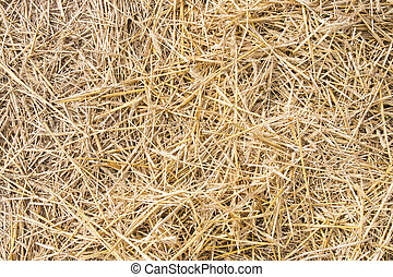 Texture hay closeup in color. Fodder for livestock and...