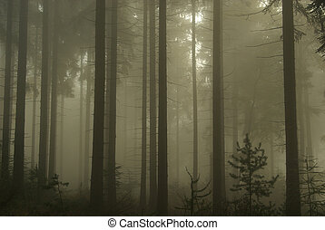 forest in fog 12