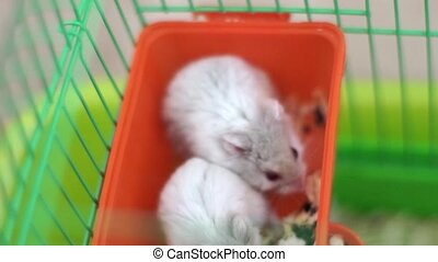 Hamsters in a cage - Cute hamster in a cage looking at the...