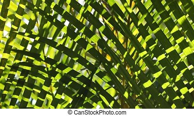 Close up of a Green leaf in nature - Green leaf in nature