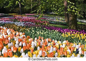 Colorful spring flowers in park