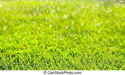 green grass lawn watering